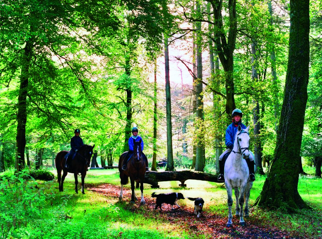 On horseback in woods in Co Tipperary