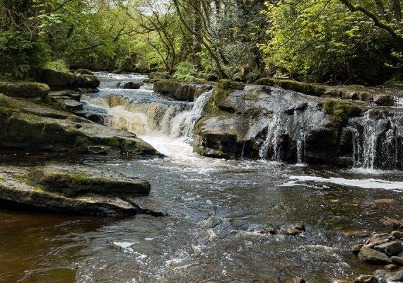 Glengarra Wood