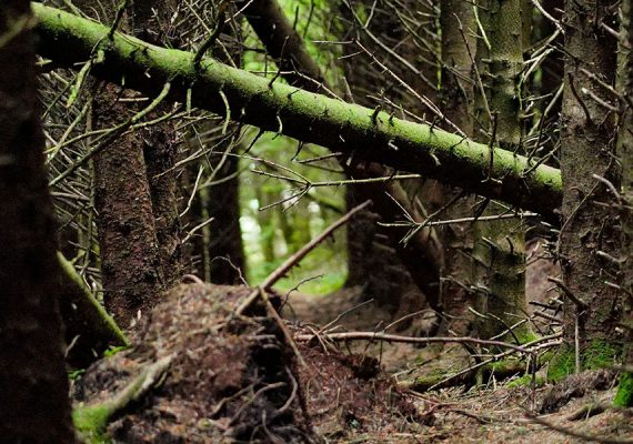 Killballyboy Wood