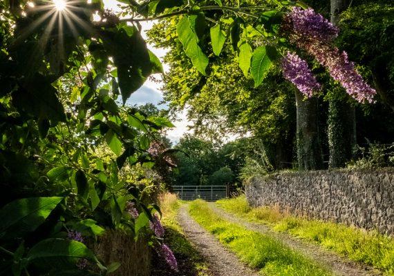 Hidden Tipperary Walk